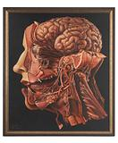 """A human head dissected: """"In memoriam"""""""