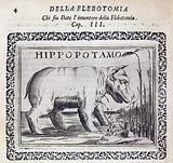 Hippopotamus engraving in 'Il Chirurgo …'