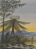 View near Auckland: Evening-Trees and Ferns