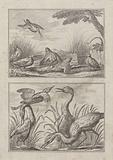 Six Snipe and four herons on two plates on one for 'A New Drawing Book