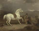 Grey Shooting Pony, Probably the Property of Johnston King, with a Groom