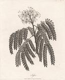 Sassa 1789