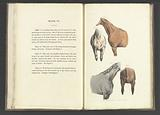 The beauties & defects in the figure of the horse